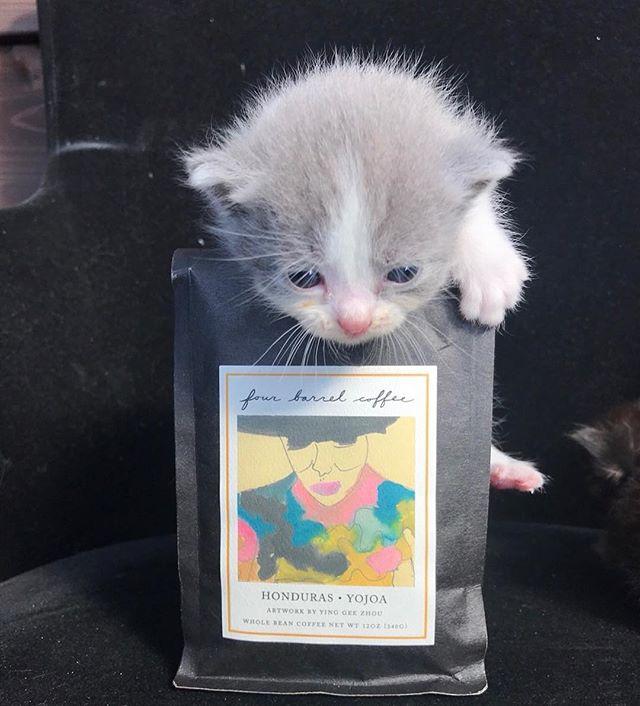 こんにちは!Sunny's coffeeではコーヒー豆も販売しております。・当店で焙煎しているコーヒー豆のほか、サンフランシスコのfour barrel coffeeのコーヒー豆もご購入頂けます!・100gから販売しております。200g以上お買い上げのお客様にはお好きなドリンク1杯プレゼント!!・お好みの粗さにお挽き致します。・ご自宅用やプレゼント用にいかがですか?・#サニーズコーヒー #コーヒー #コーヒー豆 #焙煎 #コーヒー豆専門店 #コーヒー豆販売 #コーヒー焙煎 #猫 #ねこ #fourbarrel #fourbarrelcoffee #coffee #coffeebeans #roastedcoffee #栃木県 #栃木県コーヒーショップ #大田原 #大田原カフェ