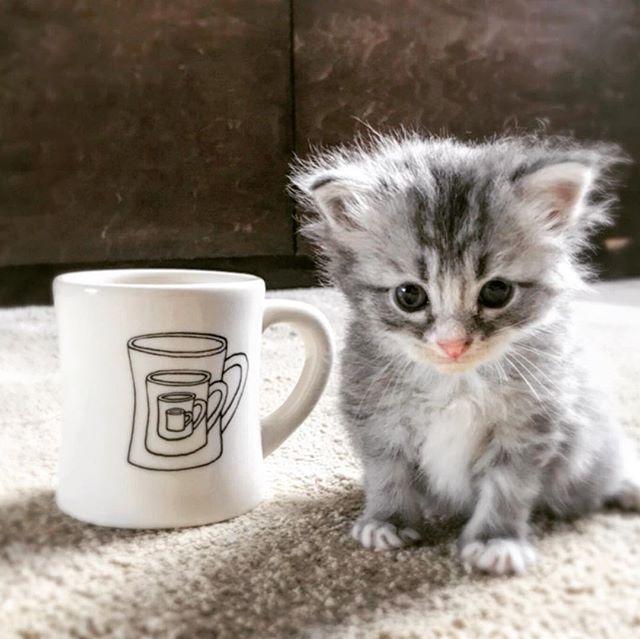 おはようございます!本日よりも9:00〜18:00まで営業しております!本日はよるのディナーはお休みとさせていただきますので、よろしくお願い致します。#sunnyscoffee #大田原カフェ #栃木カフェ巡り #coffee #coffeeshop #fourbarrel #cafe #lunch